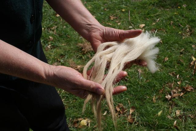 scj wool fiber