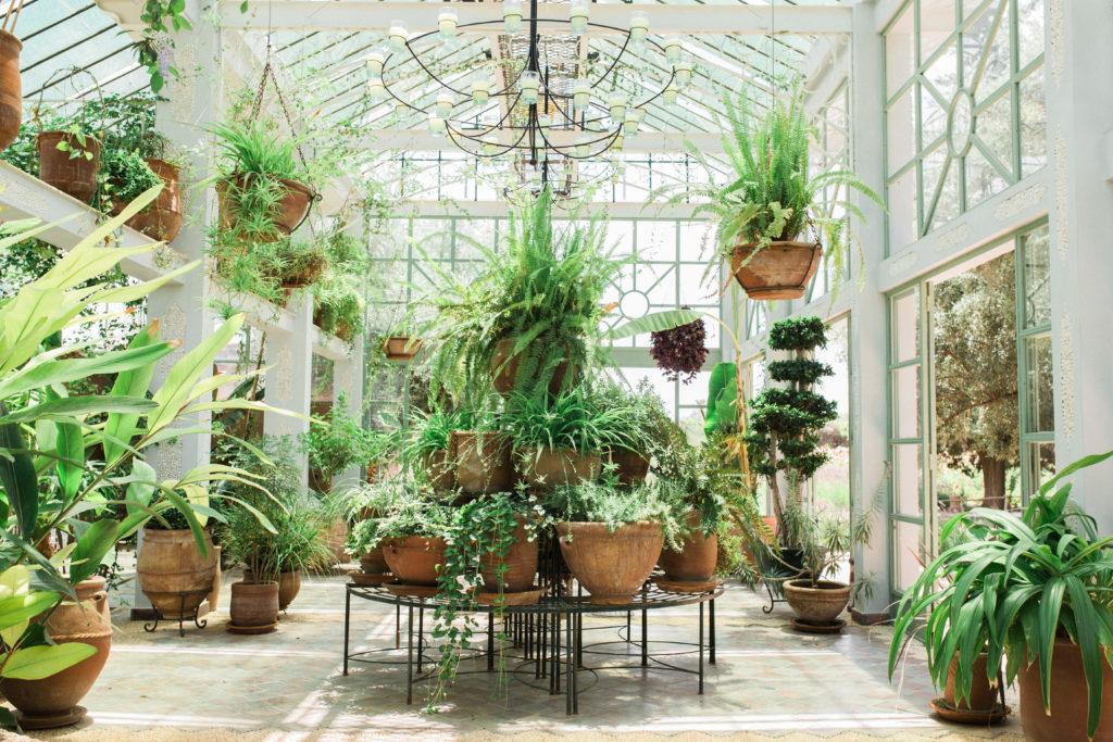 BELDI CC Greenhouse 86
