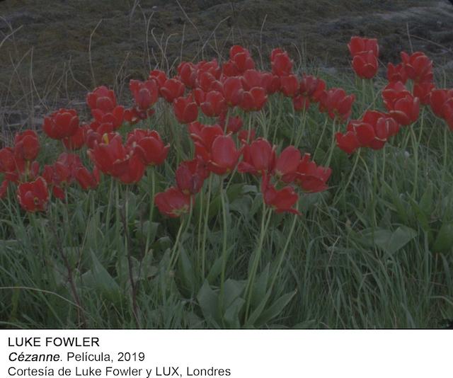 LUKE FOWLER Cezanne 5