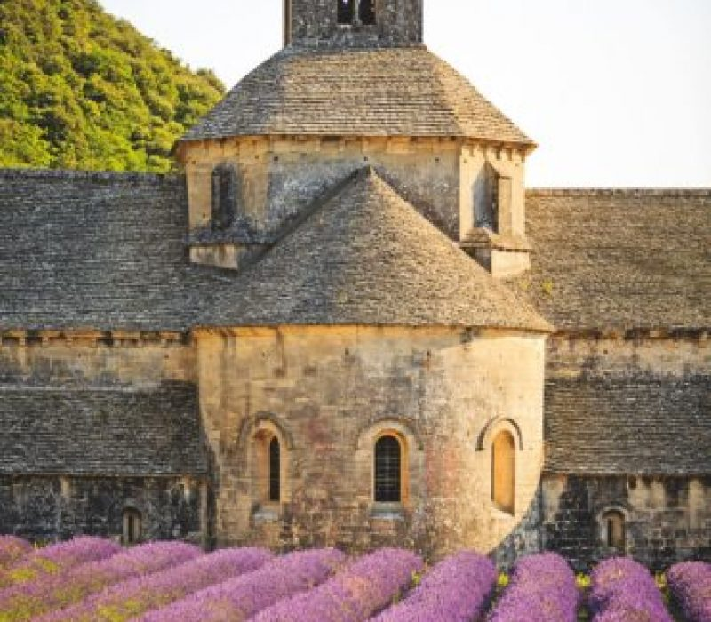 Old Senanque Abbey with blooming lavender field at sunset - Provence, France