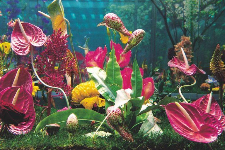 libro flowers martin quinn bc032476 1500x1003