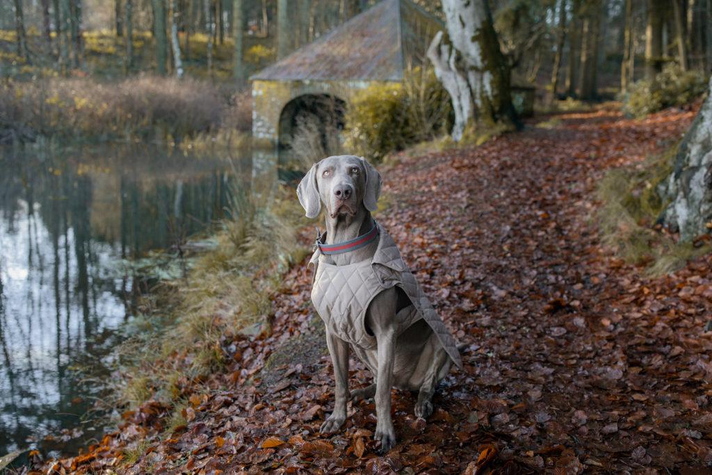 Fay x Poldo Dog couture: la cápsula para el perro